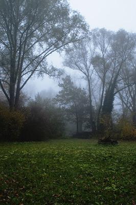 Φωτογραφίες με ομίχλη, βροχή, δέντρα